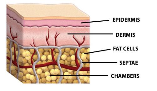 minerva clinic, lipo gold, สลายไขมัน, meso fat, Men's grooming, health, ผิวสวย, สุขภาพดี, บิวตี้บล็อกเกอร์, beauty blogger, รีวิว, พันทิป, pantip
