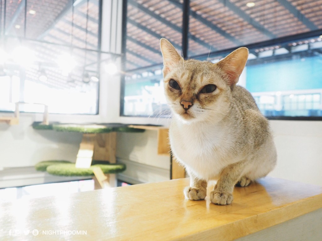 cat up cafe 1