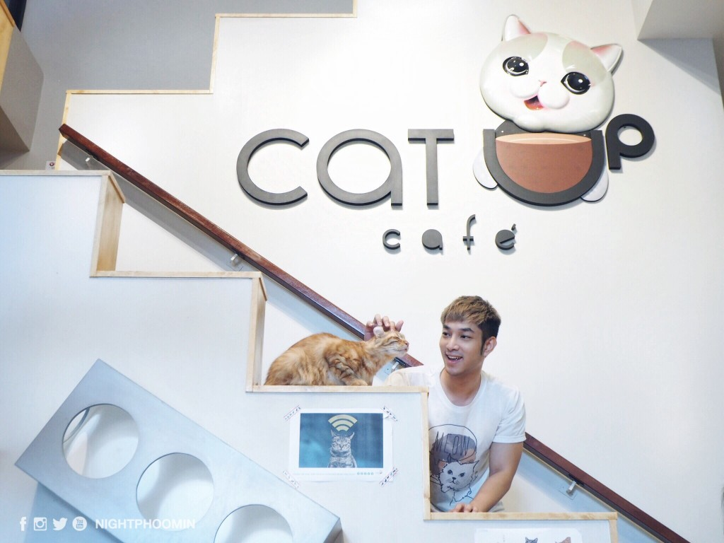 cat up cafe 17
