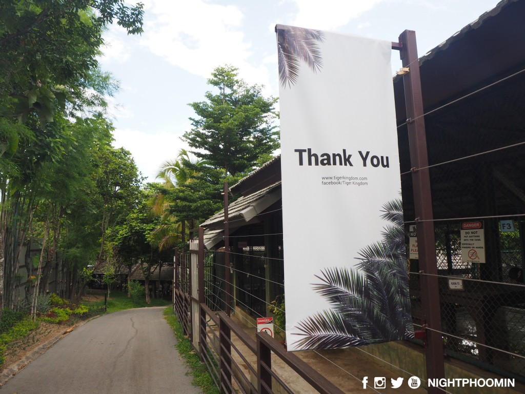 tiger kingdom chiang mai thailand คุ้มเสือ10
