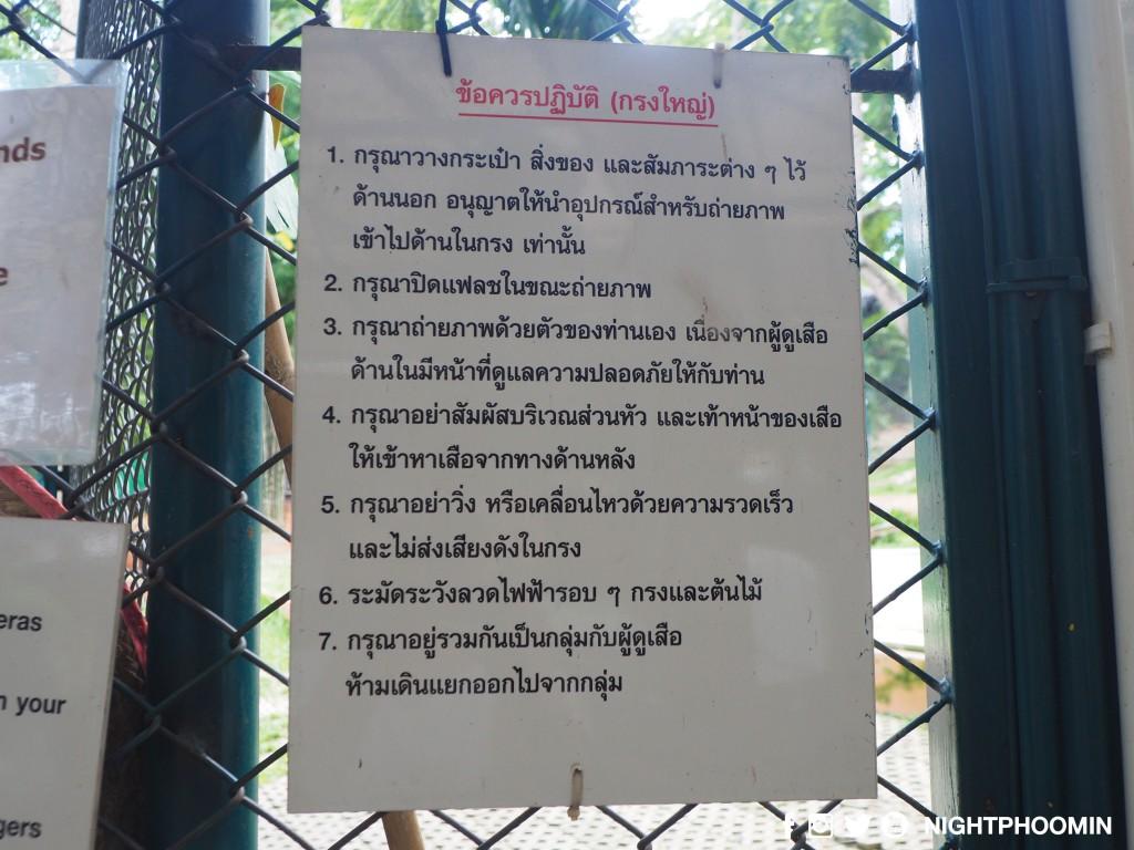 tiger kingdom chiang mai thailand คุ้มเสือ8