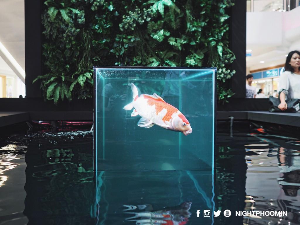 art-of-aqua13